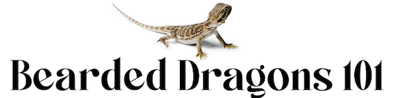 Bearded Dragons 101