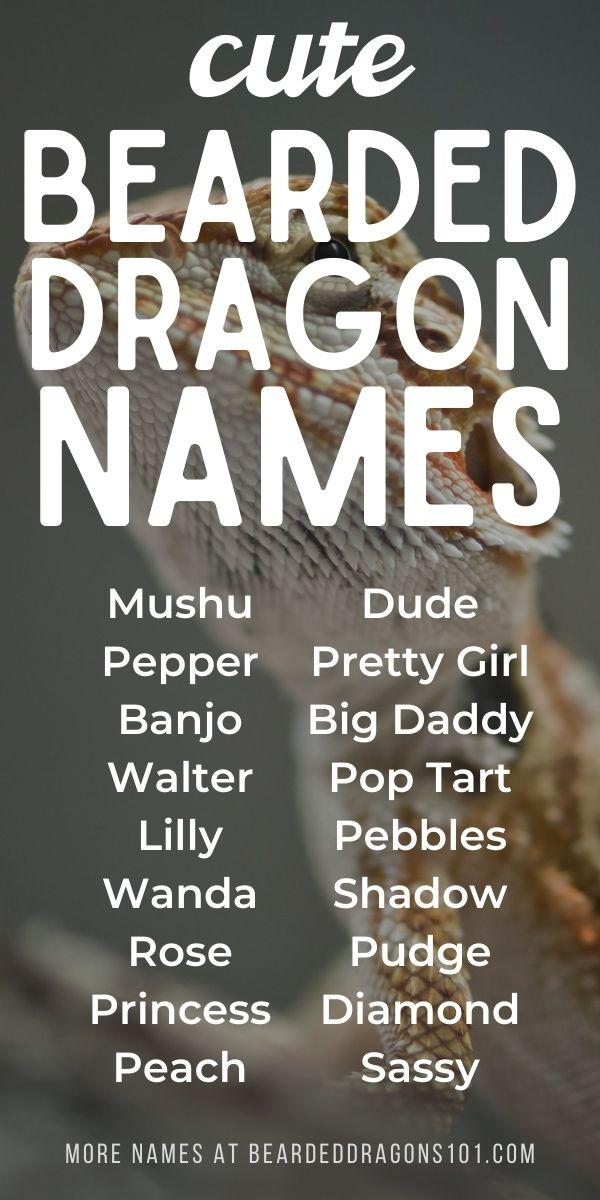 Cute Bearded Dragon Names - list for pinterest
