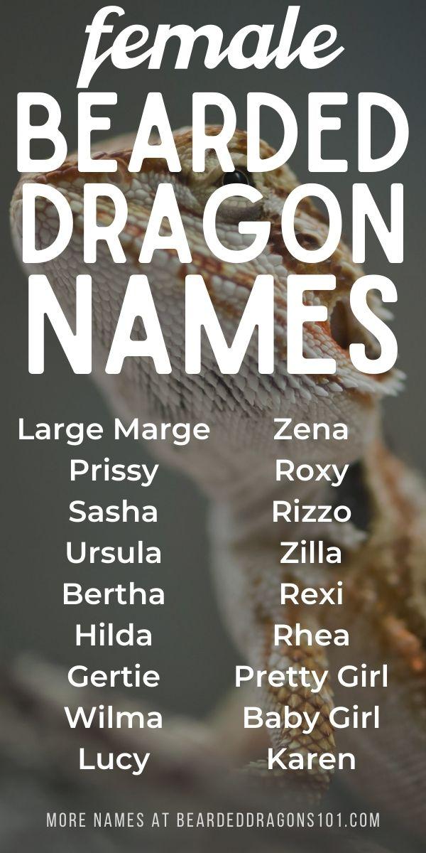 Female names for bearded dragons