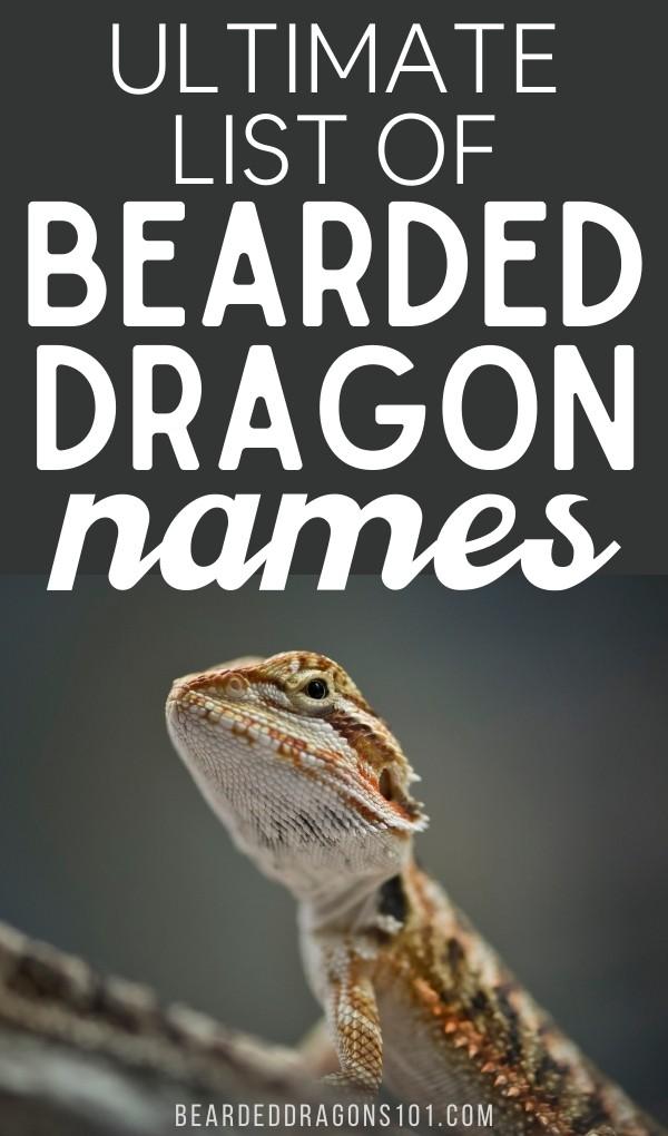 Ultimate List of Bearded Dragon Names - pin for pinterest